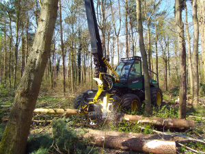 Billy cutting down trees in the forest fro ALL FIRED UP